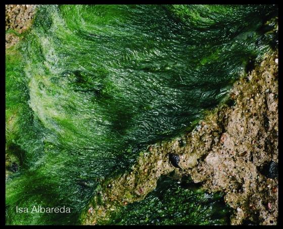 Foto Isa Albareda